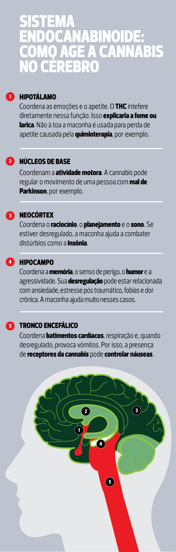 maconha_cerebro_mobile